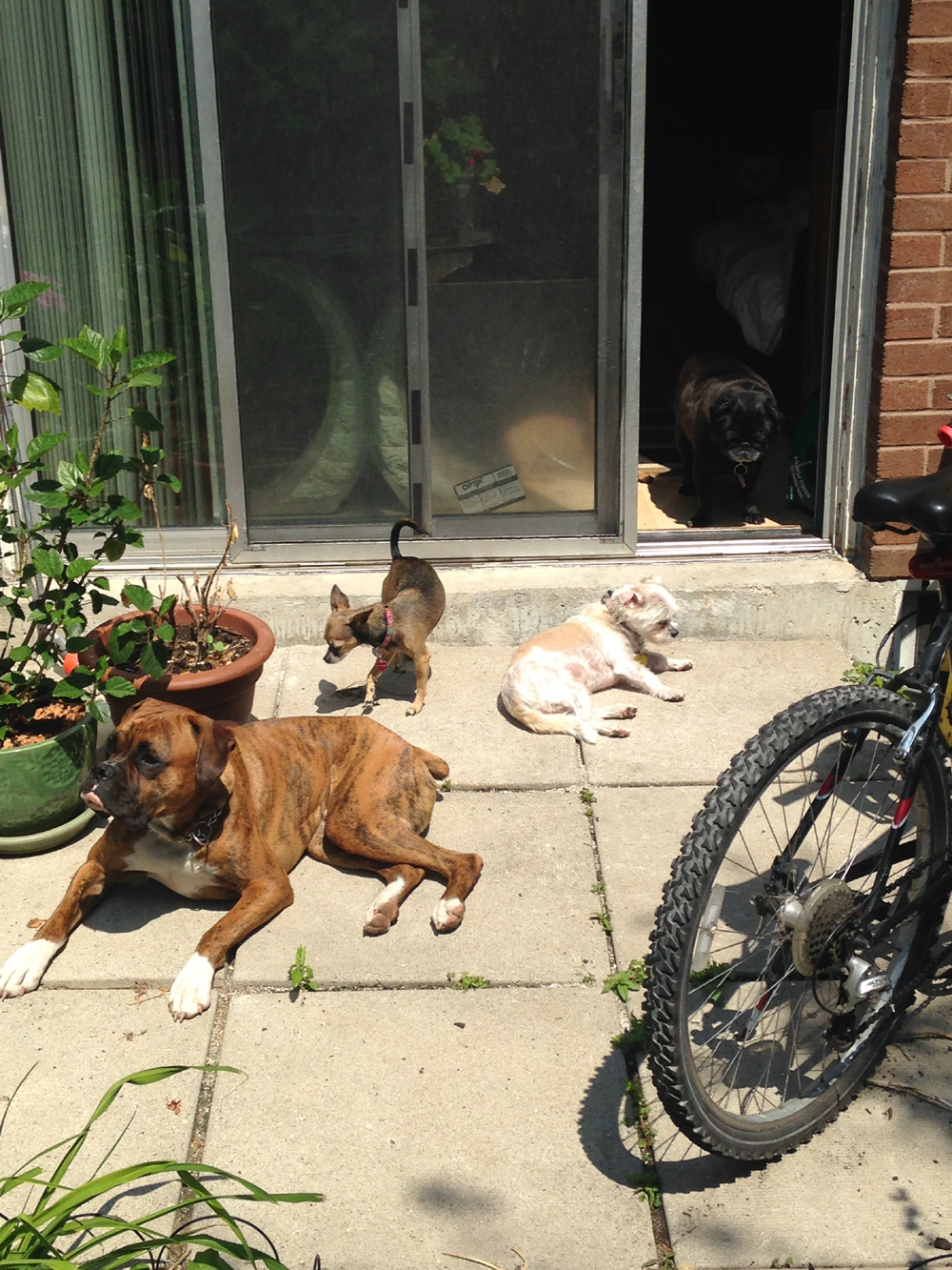 Toronto Dog Walkers, Hogtown Dogtown